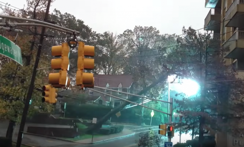 trees falling on power lines videos